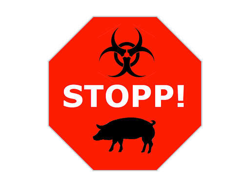 Stop sign_pig