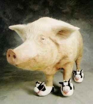 Pig-in-slippers